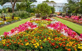 Picture flowers, UK, United Kingdom, Phlox, marigolds, gardens, Swansea Botanic Gardens