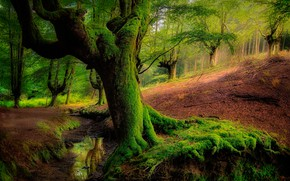 Wallpaper moss, trees, forest, slope, greens, water
