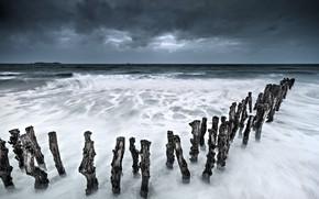 Picture sea, coast, logs