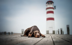 Picture each, lighthouse, dog