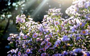 Picture the sun, rays, light, glare, Bush, buds, Boke, sentyabrin