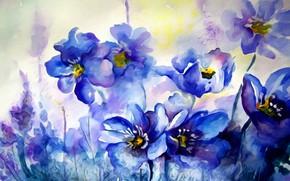 Wallpaper spring, watercolor, texture, figure, painting, primroses, paint, flowers