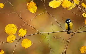 Picture autumn, bird, foliage, branch, tit
