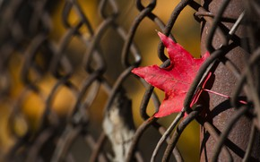 Picture sheet, background, the fence