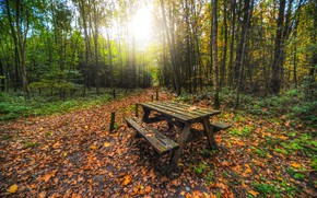 Picture autumn, forest, leaves, the sun, trees, Park, table, benches