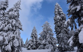 Picture cold, winter, the sky, snow, trees, nature