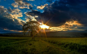 Picture greens, field, the sky, grass, clouds, sunset, tree, the evening, Canada, the rays of the …
