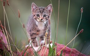 Picture on the stone, looking at the camera, tabby kitten
