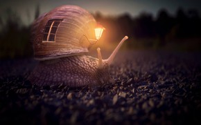 Picture snail, flashlight, house, horns