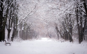 Picture winter, the city, Park, bench