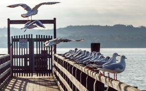 Picture seagulls, Germany, pier, Bayern, Bavaria, Ammersee