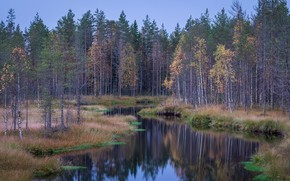 Picture forest, river, taiga