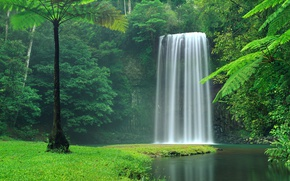 Picture grass, forest, river, trees, nature, water, Waterfall, lush, vegentation, lush vegetation, lush greenery