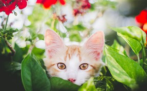 Picture look, leaves, flowers, muzzle, kitty