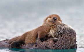 Picture Alaska, USA, cub, Kalan, Strait Prince William