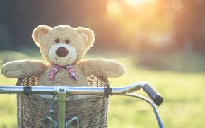 Picture summer, sunset, bike, basket, toy, bear, bear, summer, vintage, bear, bike, retro, teddy, lonely, cute, …