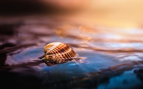 Wallpaper water, shell, macro, sea