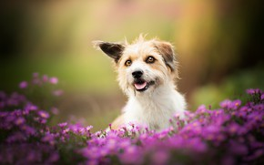 Picture bokeh, doggie, dog, flowers
