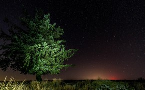 Picture the sky, night, tree