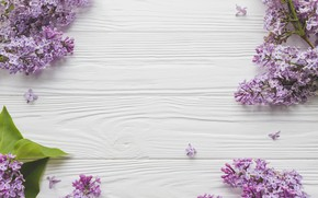 Picture Flowers, Branches, Background, Lilac