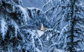 Picture winter, branches, ate, Italy, Italy, Lombardy, Lombardy, Bergamo, Bergamo, Christmas tree