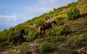 Picture grass, mountain, slope, horse, the bushes
