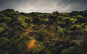 Picture stones, moss, Iceland, Iceland, Eldraun, Lava Field