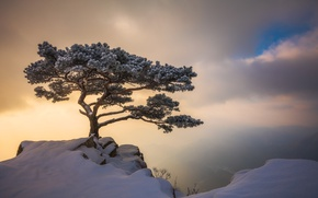 Picture winter, the sky, clouds, light, snow, tree, rocks