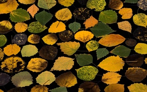 Picture autumn, leaves, background