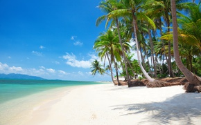Picture sand, sea, beach, the sun, palm trees, shore, island, summer, beach, sea, island, sand, paradise, …
