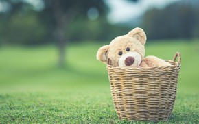 Wallpaper summer, basket, toy, bear, bear, summer, vintage, bear, retro, teddy, lonely, cute, lonely