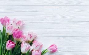 Picture flowers, tulips, pink, fresh, wood, pink, flowers, beautiful, tulips, spring, tender