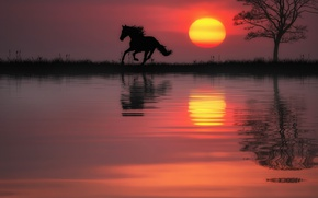 Wallpaper sunset, horse, the sun, reflection, water, horse, tree