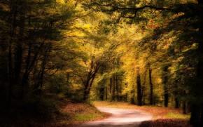 Picture road, forest, landscape, nature, beauty