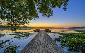 Wallpaper Lotus, lake, the bridge