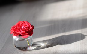 Picture background, rose, Bank