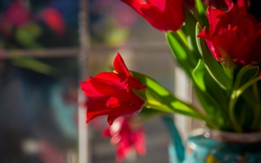 Picture bouquet, tulips, bokeh, red tulips