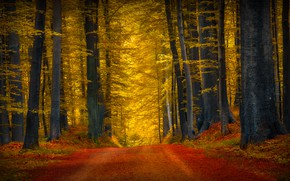 Picture road, forest, trees, nature
