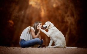 Picture mood, dog, friendship, girl, friends, bokeh, Golden Retriever, Golden Retriever