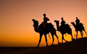 Picture India, silhouette, camel, caravan, Rajasthan, Thar desert
