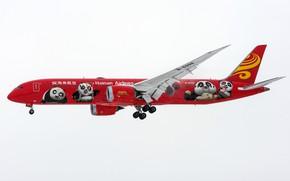 Picture a passenger plane, Red Panda, 787-9 B-6998, Hainan