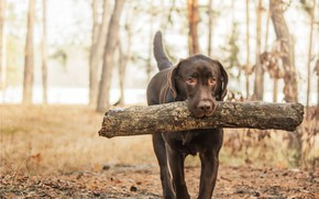 Picture forest, wood, dog
