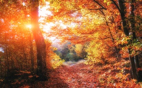 Wallpaper Light, trees, beautiful, autumn, forests, Ukraine, foliage