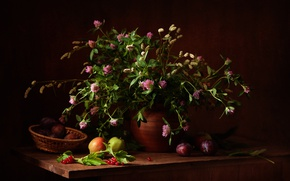 Picture berries, bouquet, fruit, still life, wildflowers, Kalina