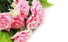 Wallpaper roses, bouquet, roses, flowers, pink