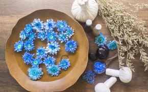 Picture flowers, stones, chrysanthemum, Spa, bags