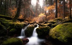 Wallpaper moss, stream, trees, forest, autumn, stones