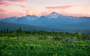 Picture flowers, mountains, morning, meadow, Colorado, Rocky Mountains