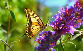 Picture Macro, Flowers, Spring, Butterfly, Spring, Bokeh, Bokeh, Macro, Butterfly, Purple flowers
