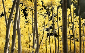 Picture trees, gold, yellow leaves, Volkov Alexander, Aspens
